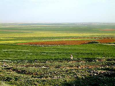 http://www.bibleplaces.com/images/Fields_of_Moab_south_of_Arnon_with_Ruth,_tb_n031801.jpg