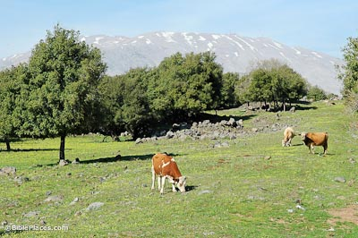Cows of Bashan, oaks of Bashan, Mount Hermon