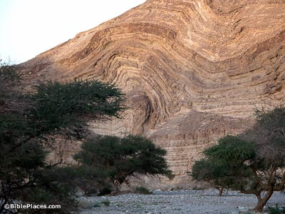 Rock layers and acacia trees in Nahal Katzra