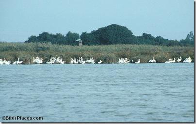 Lake Huleh birds, 70-21tb
