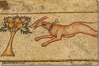 Caesarea Byzantine mansion mosaic, dog, tb011006336