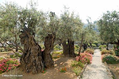 Mount of Olives (BiblePs.com)