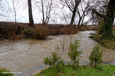 A muddy river rushing through trees and brush