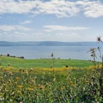 View from a green, flowery slope overlooking the Sea of Galilee, with distant mountains visible on the opposite shore