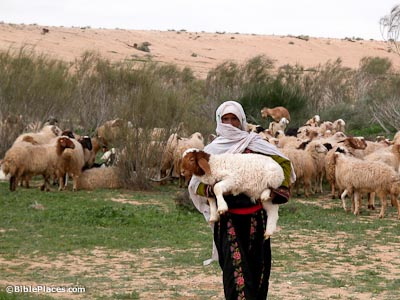 Shepherd With Lamb In Negev Riverbed Tb010303618 Bibleplaces